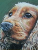 Cocker Spaniels by CharlotteMosey