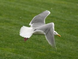 Seagull 1 by TheInfernalDemon
