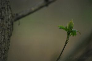 we are free to rise again by Lk-Photography