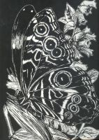 Butterfly Scratch Art by Laserbot