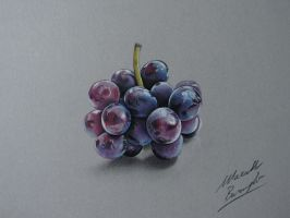 Drawing Grapes by Marcello Barenghi by marcellobarenghi