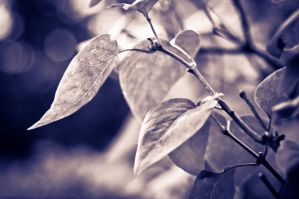 Leaves - Purple by Suinaliath