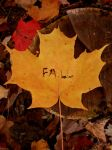 Fall by ChristaSheen