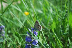 Butterfly on green by MacTinus