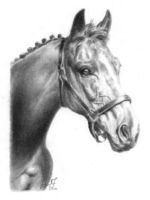 Horse Portrait by chipset