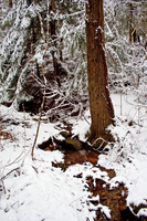 Winter Forest Stock 38 by AreteStock