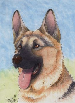 German Shepherd - portrait by Shel-chan