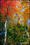 Autumn Colors by CecilyAndreuArtwork