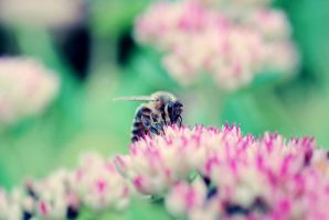 Bee by emshh