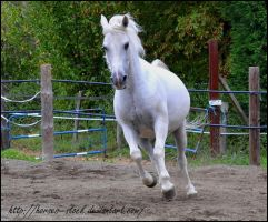 Alison - Stock 6 by Horses--Stock