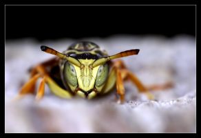 Nuclear Wasp by ivekvatrozic