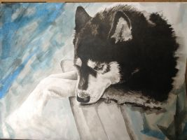 Ink Painting of a Husky by Amy221B