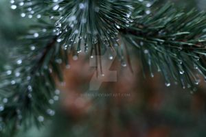 Rainy in the Forest V by Quenia