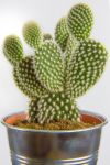 Flawless Little Cactus by atmp