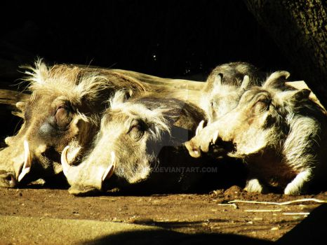 warthogs by cassidied