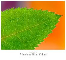 A Leaf and Other Colors by signmeupscotty