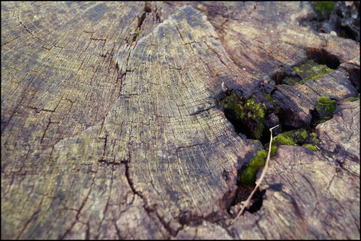 Trunk/Wood Spring by KSBaker