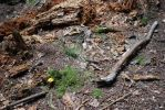 Forest Floor by Chalax91
