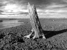 Stump in the Mud by PaddleGallery