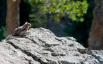 a squirrel on a rock by terryrunion