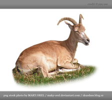PNG STOCK: Wild sheep female by MAKY-OREL