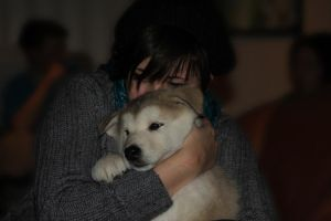 Me and Iluqs puppies by Lizzimoa