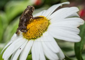 A Frog and a Flower. by liquidozzwald