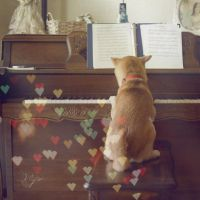 The Next Mozart by miss-beibei