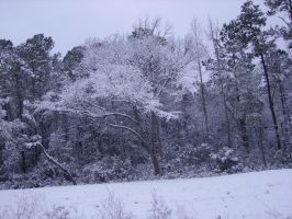 snow in MB SC 2-13-2010 11 by unickme