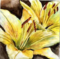 Lily for a Lily by Floda