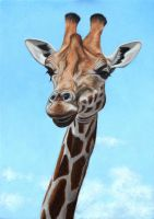 Giraffe Oil on panel. by painterman33