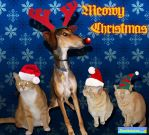 Christmas Pets 2014 by DCLeadboot