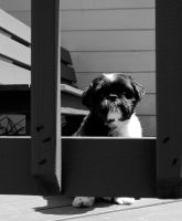 Doggy Jail by cyspence