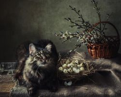 From a series of still-life with a cat by Daykiney