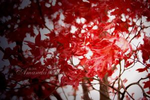 red leaves by firstkissfeelings