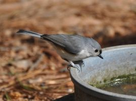 Pweese fill my water bowl by Tailgun2009
