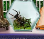 Insect Lover's Dream P1 by Pieces-Of-Her-Head