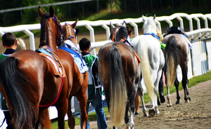 Horse Racing 40 by JullelinPhotography