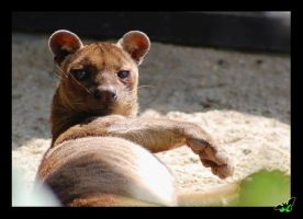 Fossa ohh... by Wild-Soul