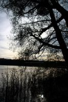 Straussee II by cheeky-cristal