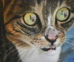 Cat with dogs in eyes - pastel by xxx-ellie