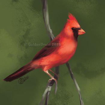 Male Cardinal - SP by GoldenDruid