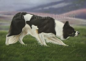Max  - Border Collie Commissioned portrait by Canis-Lupess