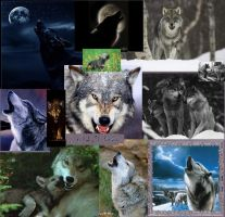 wolf collage by DragonJess