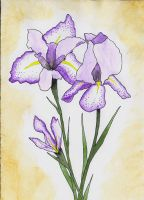 Irises by xxgatxx