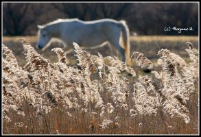 horse IV by moem-photography