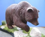 Grizzley Bear 2 by Bagheera3