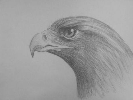Golden Eagle by TheMoonRaven