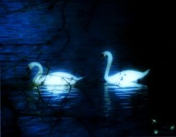 Swan Lake... by Leocervas