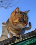cat on the roof by Mari-Ghostly
